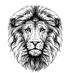 lion sketchy graphical black and white portrai vector image