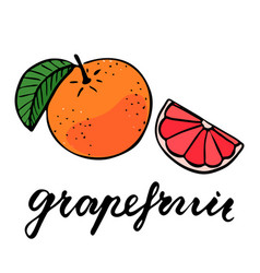 Round ripe grapefruit with one green leaf half a vector
