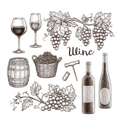 Wine set isolated on white background vector
