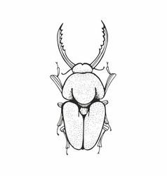 Beetle black and white sketching vector