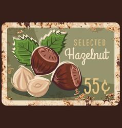 hazelnut nuts hazel metal rusty plate price sign vector image