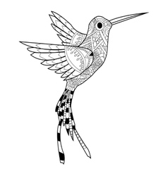 Hummingbird coloring for adults vector