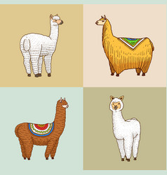 Set of cute alpaca llamas or wild guanaco on the vector