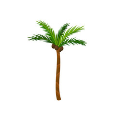 Tall palm tree with green pinnate leaves brown vector