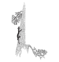 Weasel and tree in this frame vintage engraving vector