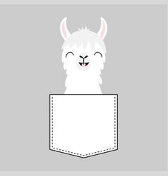 Llama alpaca face head in pocket smiling vector