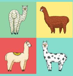 set cute alpaca llamas or wild guanaco on the vector image
