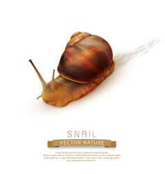 Snail crawling on a white background vector