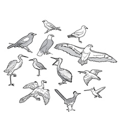 A collection of Birds vector