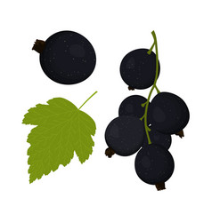 currants on white vector image