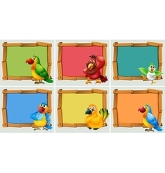Frame design with parrots vector image