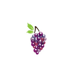 grape with leaf icon vector image