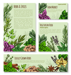 Herb and spice sketch banner of natural seasoning vector