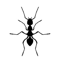 Insect anatomy Silhouette Formica exsecta Sketch vector image