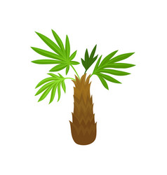 palm tree with green fan shaped leaves tropical vector image