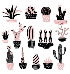 pink cacti 2 in pots vector image