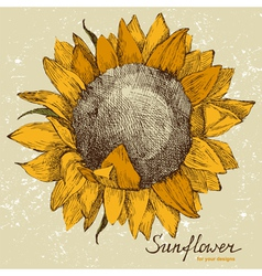 Sunflower fower vector