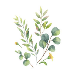 Watercolor arrangement with eucalyptus and vector
