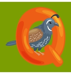 letter Q with animal quail for kids abc education vector image