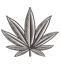 a cannabis leaf vector image