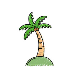 Palm with coconuts and leaves vector