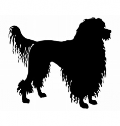 Portuguese water dog vector image