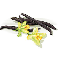 Vanilla beans and flowers vector