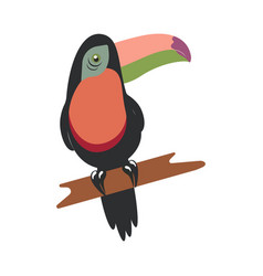 tucan on white background vector image