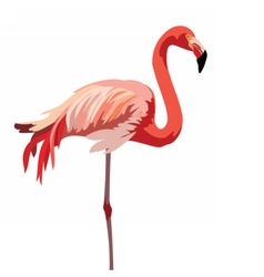 Flamingo bird isolated on white vector image