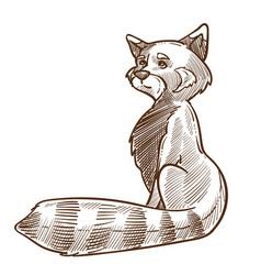 raccoon animal side view hand drawn sketch vector image