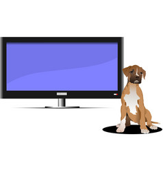 screen of plasma or lcd tv set and sitting dog vector image