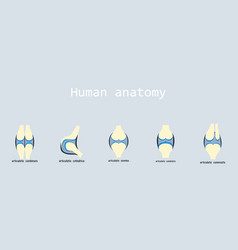 Set of knee joint health care icon flat vector