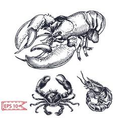 Sketch - crab shrimp lobster vector