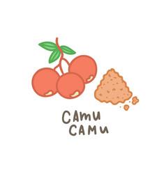 camu camu powder superfood vector image vector image