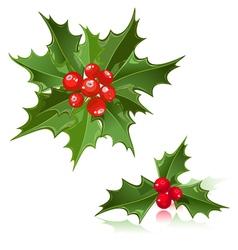 Christmas flower holly berry vector