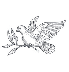 Dove or pigeon flying with olive branch in claws vector