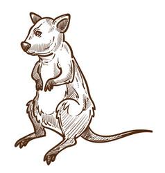 opossum marsupial animal full size hand drawn vector image