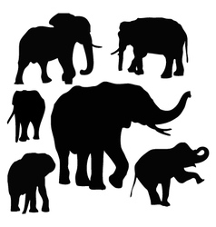 Thai elephants vector