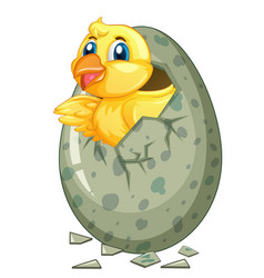 little chick comes out of gray egg vector image vector image