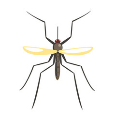 mosquito insect colorful cartoon character vector image vector image