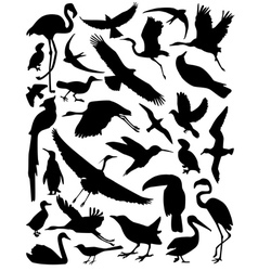 silhouette of the birds vector image