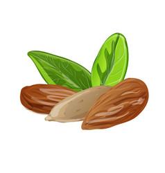 Almond icon cartoon style vector