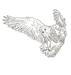 Owl hand drawn black and white vector