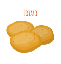 potato organic food cartoon flat style vector image