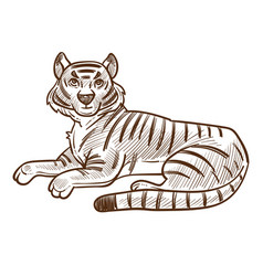 tiger animal lying hand drawn sketch vector image
