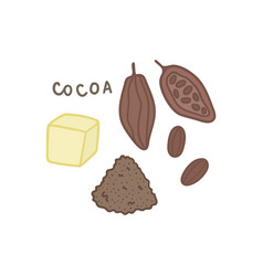 cocoa superfood isolated on white vector image vector image
