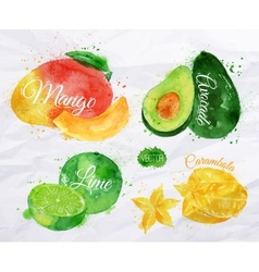 Exotic fruit watercolor mango avocado carambola vector