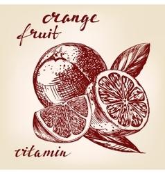 fruit orange set hand drawn llustration vector image vector image