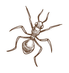 ant insect top view hand drawn sketch vector image