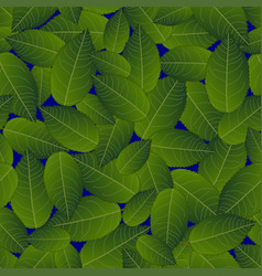 Camellia leaves on blue background vector